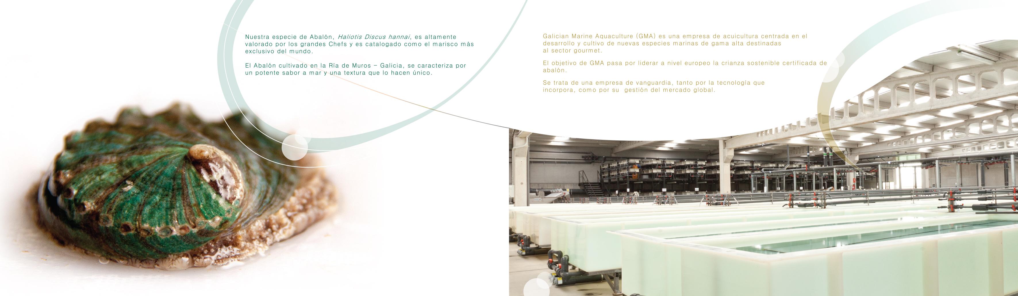LIBRO RECETAS ABALON para web JK-2 150